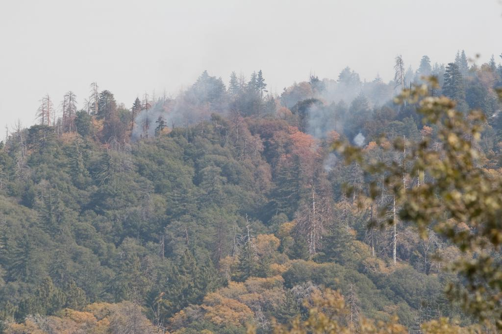Grass Valley Fire