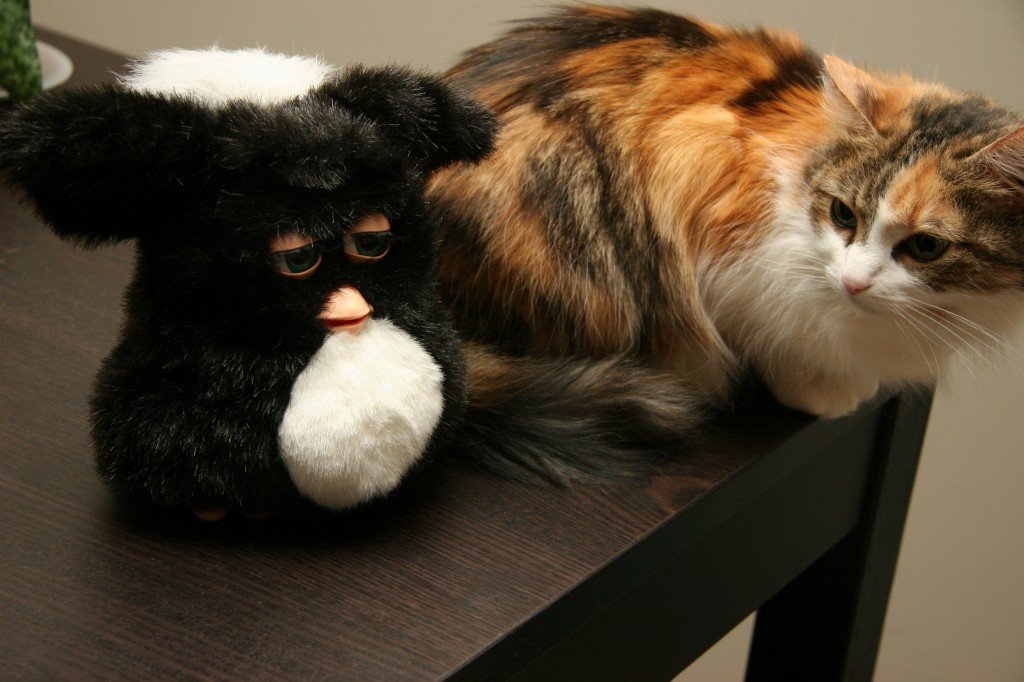 New Furby and kitty
