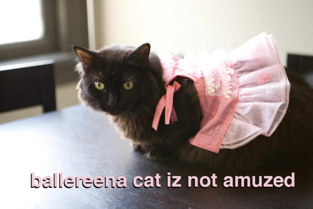 ballereena cat iz not amuzed