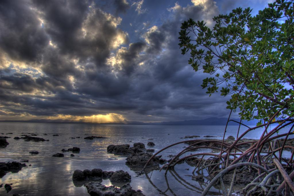 mangrove sunset hdr