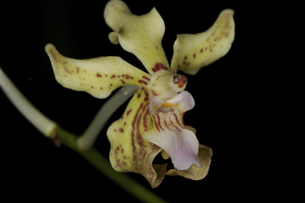 orchid or mammal?
